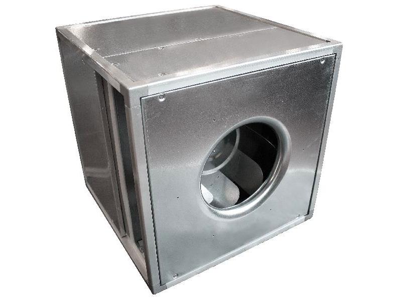 s-cube cat